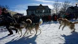 dog-sleds-2016