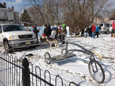 fi-2013-jersey-sands-dog-sleds